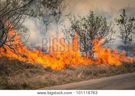 Bushfire Burning At Kruger Park In South Africa - Disaster In Bush Forest With Fire Spreading In Dry