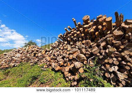 Wooden Logs And Branches On Blue Sky