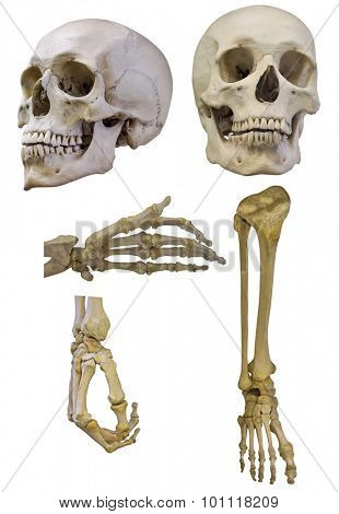 set of human skeleton parts isolated on white background