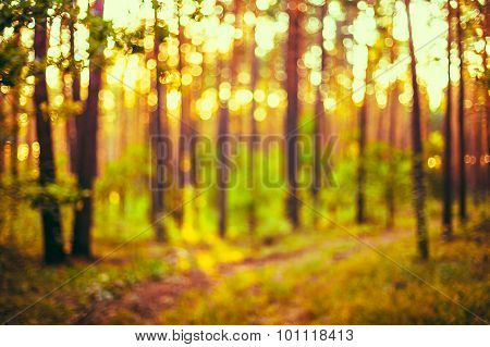 Abstract Autumn Nature Green and Yellow Colors Natural Blurred F