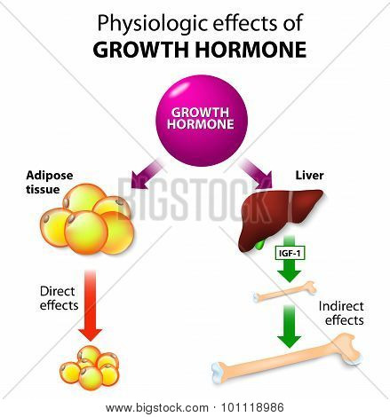 Growth Hormone Or Somatotropin Or Somatropin