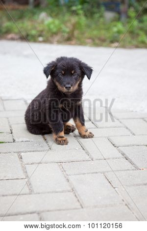 Black puppy sitting looking to camera