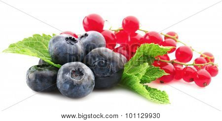Blueberries and red currants isolated on white