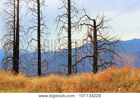 Widfire Remnants