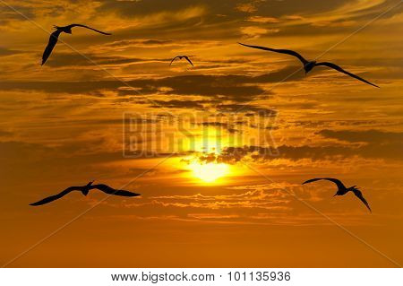 Birds Silhouette Flying