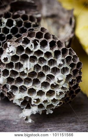 Hornet Nest Close Up
