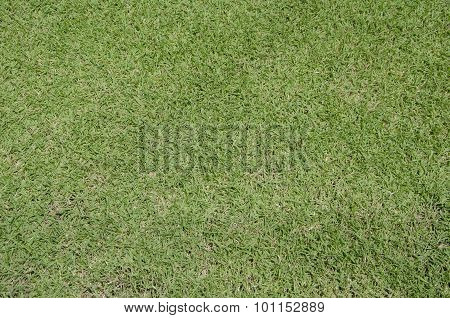 Green Grass Turf Floor Texture Background
