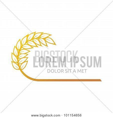 logo Wheat abstract vector