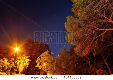 Pine Wood And Lamppost Under A Starry Sky In Alghero
