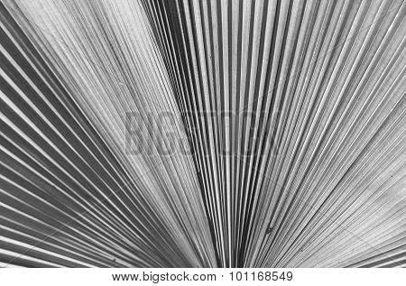 Abstract light background of palm leaves.