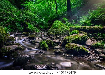 Forest stream running over mossy rocks. Filtered image: colorful effect.