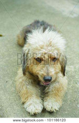 Cute Furry Dog On Concrete Floor