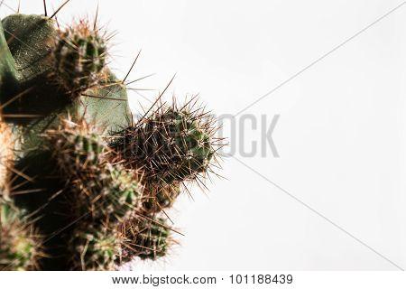 Cactus Children, Isolated
