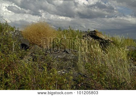 steppe plants