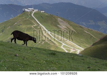 Sheep In Idyllic Summer Mountains Landscape, Austria