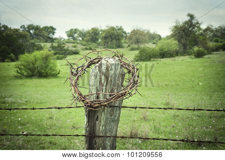 Crown Of Thorns On A Texas Hill Country Fence Post