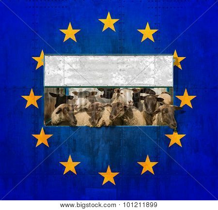 Herd of sheep shut away behind a wall with the EU logo