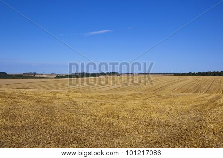 Harvested Wheat Fields