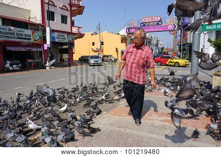 Pigeons Waiting For Feed In Malacca