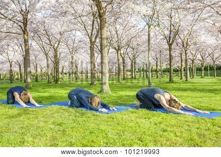 Yoga group stretching on green grass in a spring park