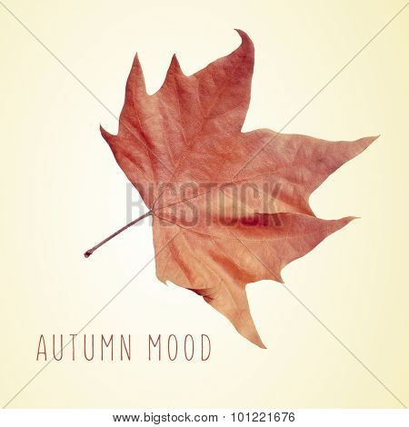 a dry leaf of plane tree and the text autumn mood on a beige background