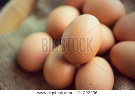 Fresh Egg From A Chicken Farm