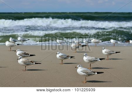 Seagulls And The Surf