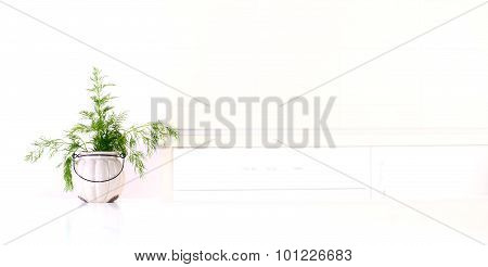 Dill In Pot In The Kitchen