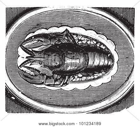 Lobster served on a jelly, vintage engraved illustration.