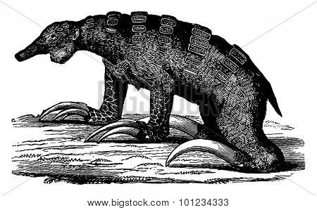 The Megalonyx, toothless mammal quaternary the Americas, vintage engraved illustration. Earth before man 1886.