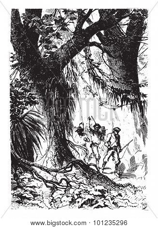 The little band had not gone fifty steps, vintage engraved illustration. From Jules Verne 15 years old Captain 1800s book.