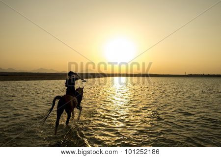 ride off into the sunset in egypt, focus at the horse/rider