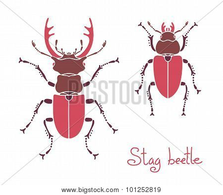 Male and female stag beetle, Lucanus cervus, Stag-beetle