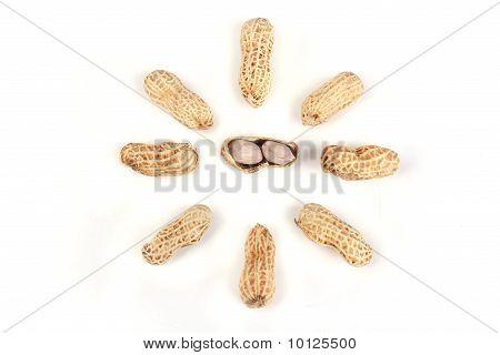 Star Peanut