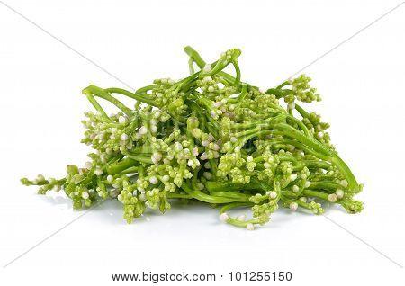 Ceylon Spinach On White Background