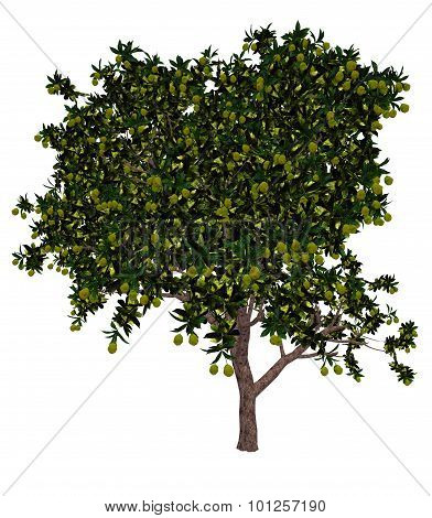 Mango tree - 3D render