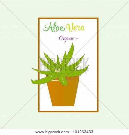 Aloe vera plant in brown pot