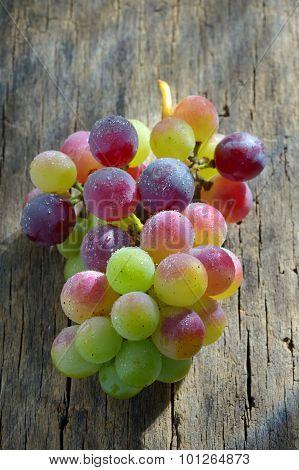 Unripe Grapes