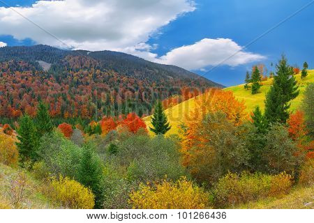 Bright Sunny Autumn In The Mountains
