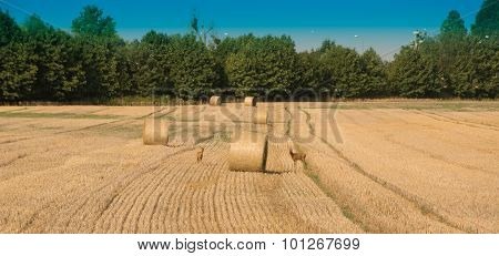Harvest, fields and meadows during harvest