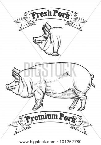 Premium pork meat vector label, butcher emblems or logo