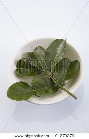 leaf of bergamot (kaffir lime) on white background