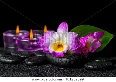 Spa Still Life Of Purple Orchid Dendrobium, Green Leaf Calla Lily And Candles With Drops On Black Ze