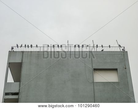 Seagulls At The Top Of A Building