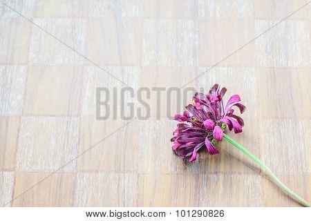 Dried Zinnia Flower
