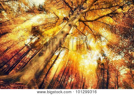 Enchanting Forest Scenery In Autumn