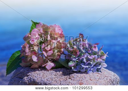 Hydrangea Blossoms On A Stone, Blue Ocean Background