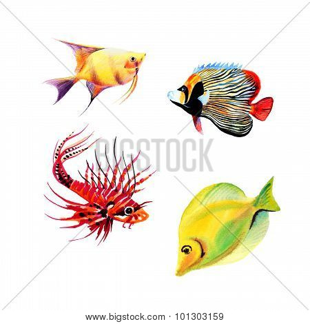 Exotic fish collection