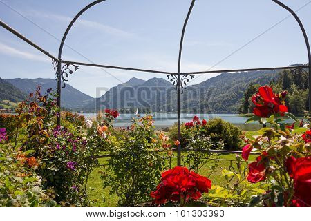 Lake View Schliersee Through Gazebo With Roses And Clematis