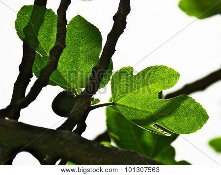 Leave,branch